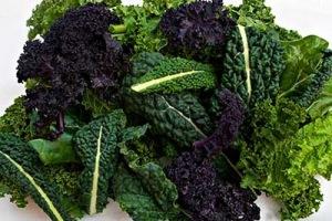 Black Lactina and Purple & Green Kale